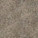 Dry grass seamless texture Royalty Free Stock Image