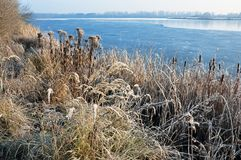 Partially frozen lake with dry grasses on the shore. Dry grass on the shore of a partially frozen lake Royalty Free Stock Photography