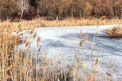 Dry grass on the shore of a snow-covered river, landscape Stock Photography