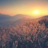 Dry grass sky summer sunset vintage filter Stock Photos
