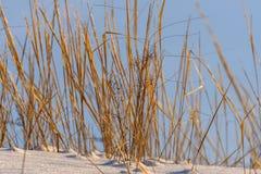 Dry grass snow field Stock Image
