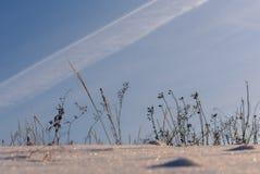 Dry grass snow field Royalty Free Stock Photo