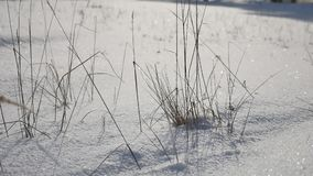 Dry grass in the snow field, winter, winter wind landscape royalty free stock photo