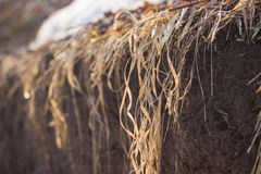 Dry grass and a snowy field Royalty Free Stock Images