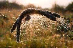 Dry grass in spiders web Stock Image