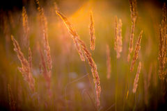 Dry grass and sun Stock Photo