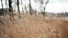 The dry grass sways beautifully in the wind. Very atmospheric