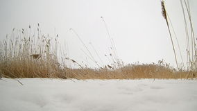 Dry grass sways in the wind in a field in winter stock footage