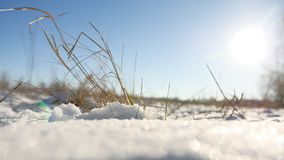 Dry grass sways in the wind nature winter snow landscape field steppe. Dry grass sways in wind nature winter snow landscape field steppe Royalty Free Stock Photography