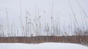 Dry grass sways in the wind snow winter field beautiful landscape nature Stock Images