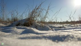 Dry grass sways in the wind winter snow nature landscape field steppe. Dry grass sways in wind winter snow nature landscape field steppe Stock Images