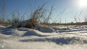 Dry grass sways in the wind winter snow nature landscape field steppe. Dry grass sways in wind winter snow nature landscape field steppe Royalty Free Stock Image