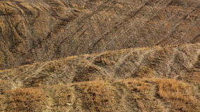 Dry grass texture Royalty Free Stock Images