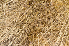 Dry grass texture Stock Image