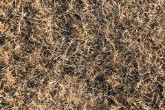 Dry Grass Texture Stock Photo