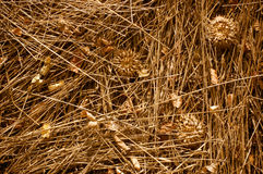 Dry grass texture stock images