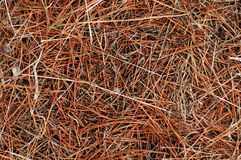 Dry Grass texture. Red brown Royalty Free Stock Photography