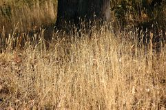 Margaret National Parks showing dry grass that is fuel for fires. stock images
