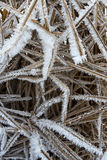 Dry grass under the ice Royalty Free Stock Photo