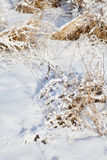 Dry grass under snow Royalty Free Stock Photography
