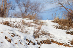 Dry grass under snow and sky Stock Photo