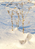Dry grass under the snow Stock Images