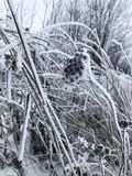 Dry grass under a thick snow cover stock image