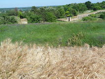 Dry grass. View from the fortress in Novi Sad royalty free stock photo