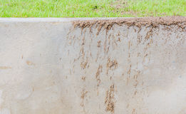 dry grass on wall Royalty Free Stock Photos