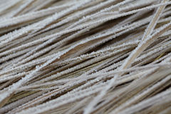 Dry grass with water crystals.  Stock Images
