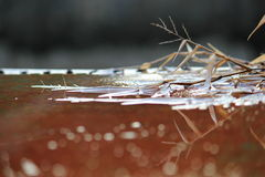 Dry grass on water Stock Image