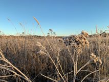 Dry grass in winter morning field. Closeup shot of dry thistle grass in morning stock images