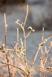 Dry grass in winter Stock Photography