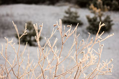 Dry grass in winter Royalty Free Stock Photography