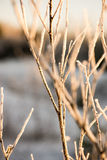 Dry grass in winter Royalty Free Stock Photo