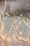 Dry grass in winter Royalty Free Stock Photos