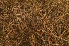 dry grasses background Stock Photography