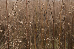 Dry grasses Stock Image