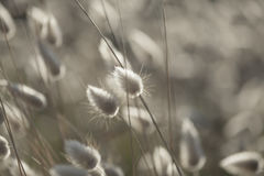 Dry grasses with Royalty Free Stock Photos