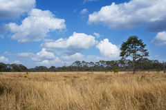 Dry grasses field Royalty Free Stock Image