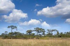 Dry grasses field Stock Photos
