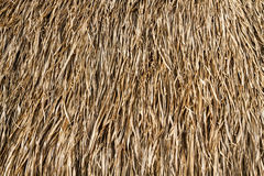 Dry grasses roof Royalty Free Stock Photo