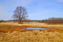 Flood-meadow at early spring Royalty Free Stock Photography
