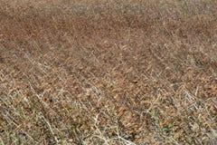 Dry Grassland Stock Photos