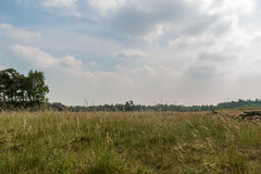 Dry grassland with beautiful sky Stock Images