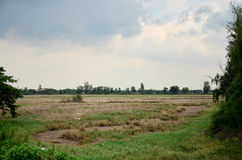 Dry grasslands occur from disposal of Industrial waste Stock Photography