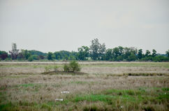 Dry grasslands occur from disposal of Industrial waste Royalty Free Stock Image