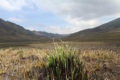 Dry grasslands Stock Photo