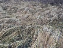 Dry gray grass on the field in autumn in the afternoon royalty free stock photos