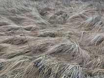 Dry gray grass on the field in autumn in the afternoon royalty free stock photo